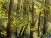 forestflowers-sm